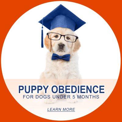 Puppy TEST 7