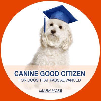 Cnine good citizen small